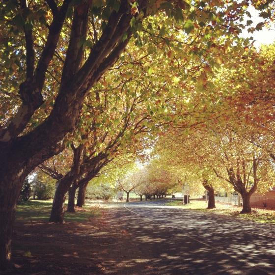 treelinedstreetautumn
