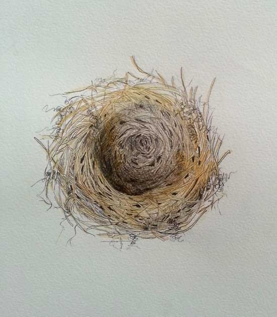 nest drawing